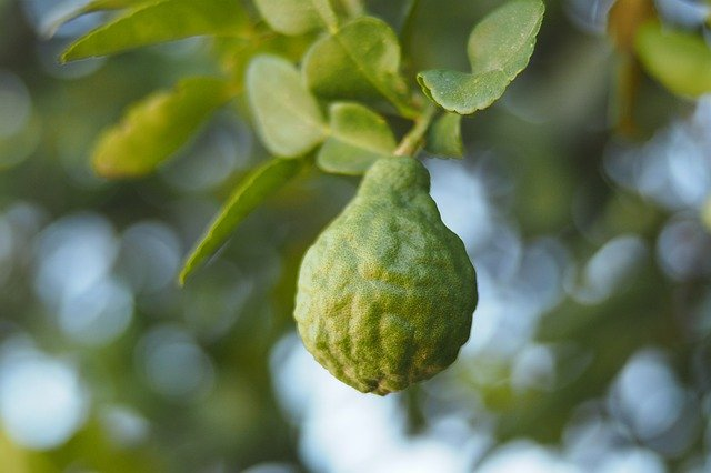 what does bergamot smell like